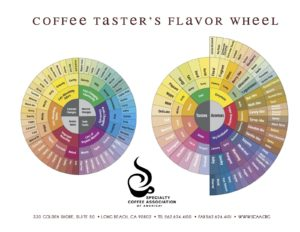 Image Credited: Specialty Coffee Association of America