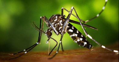 Dengue Virus – Transmission, Symptoms, Concerns and The Facts That We Should Know