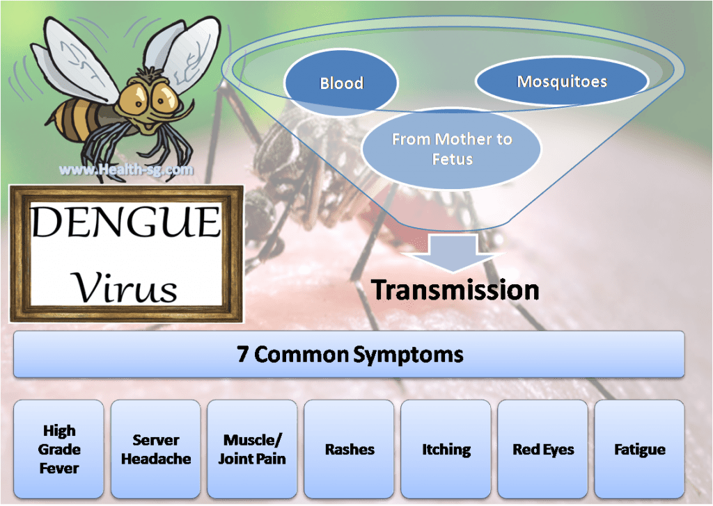 Dengue Virus, Dengue Fever - www-health-sg-com